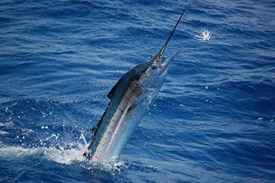Activities in akumal and puerto aventuras mexico for Deep sea fishing half moon bay
